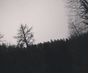 forest, sad, and woods image