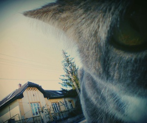cat, eye, and house image