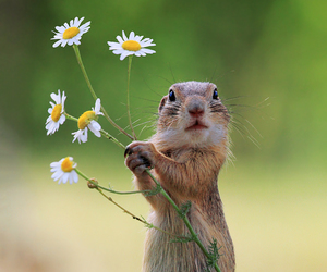 animal, flowers, and squirrel image