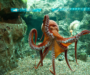 octopus, photography, and water image