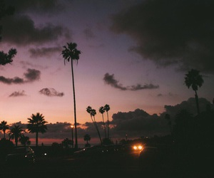 night, palm, and summer image