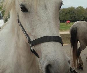 mon cheval and ma rafale image
