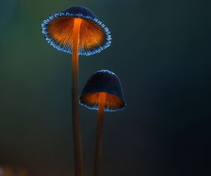 mushrooms and vivid image