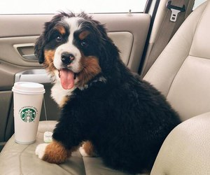 dog, puppy, and starbucks image