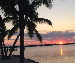 florida, palm, and sea image