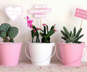 pink, cactus, and tumblr image