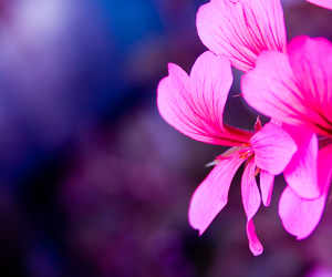 femininity, pink, and flower image