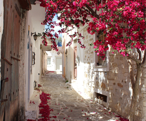travel, city, and flowers image