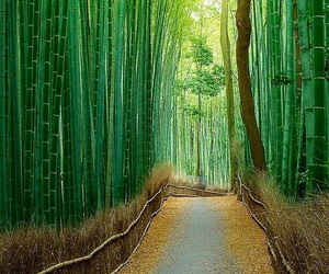 bamboo, china, and place image