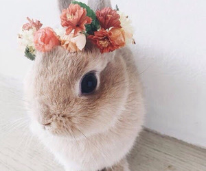 animals, bunny, and flower crown image