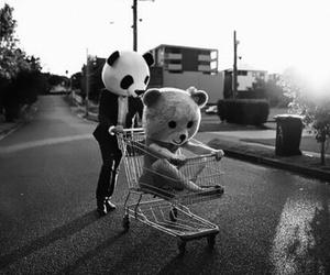 panda, bear, and black and white image