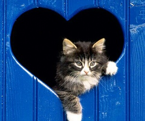 cat, heart, and blue image