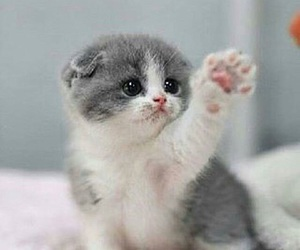 baby animals, cats, and pets image