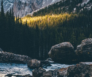 nature, beautiful, and forest image