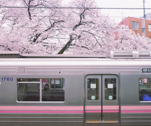 pink, japan, and train image