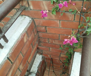 tumblr, flowers, and wall image