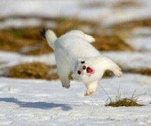 animal, funny, and snow image