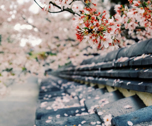 flowers, japan, and beautiful image