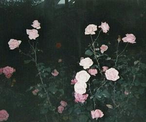 amazing, botanical, and flowers image