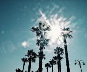 palms, summer, and summerfeelings image