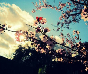 flowers, sky, and clouds image