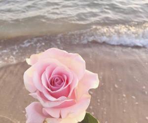 rose, pink, and sea image
