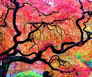 tree, nature, and colorful image
