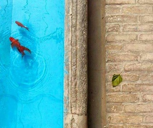beautiful, fish, and swim image