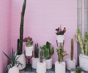cactus, pink, and garden image
