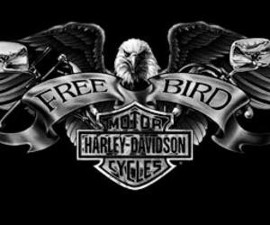 harley davidson, motorcycle, and motos image