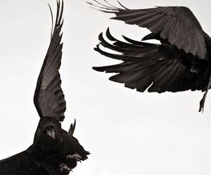 bird, black, and raven image