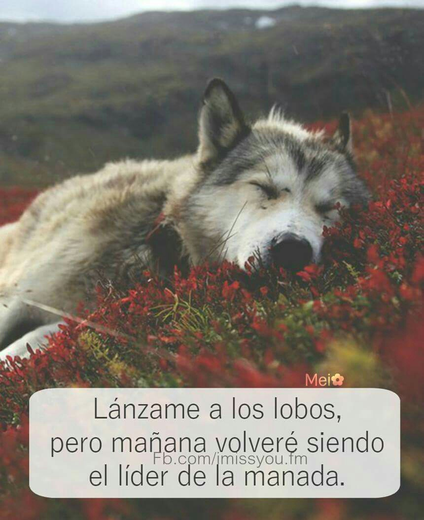 Frases Uploaded By Mirian 3 On We Heart It