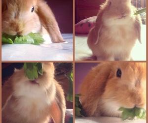 bonito, bunnies, and bunny image