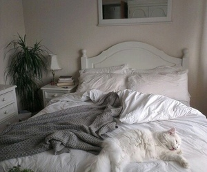 cat, white, and room image