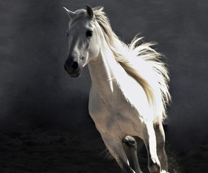 beautiful, cheval, and beaute image