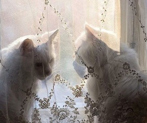 cat, theme, and aesthetic image