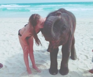 elephant, girl, and beach image
