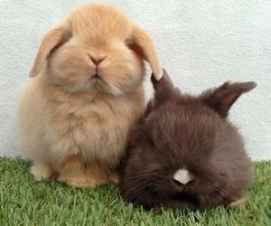 bunny, rabbit, and animals image