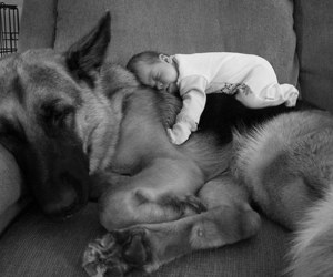 animal, baby, and friends image