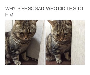 cat, sad, and funny image