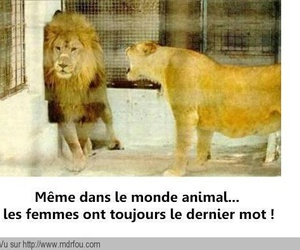 french and animal image