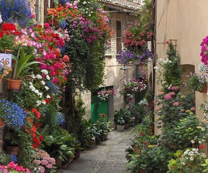 flowers, street, and italy image