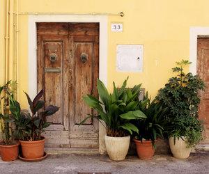 door, plant, and summer image