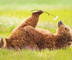 bear, flowers, and animal image