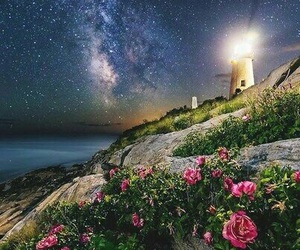 flowers, night, and sky image