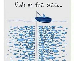 fish, quote, and funny image