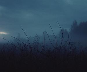 dark, nature, and grunge image