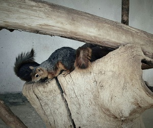 baby, squirrel, and cute image