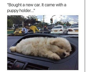 puppy, cute, and car image