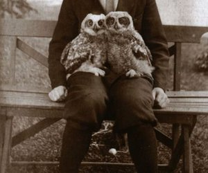 owl and photography image